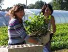zaw_ogrodnictwo1