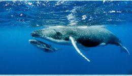Dzień Wielorybów