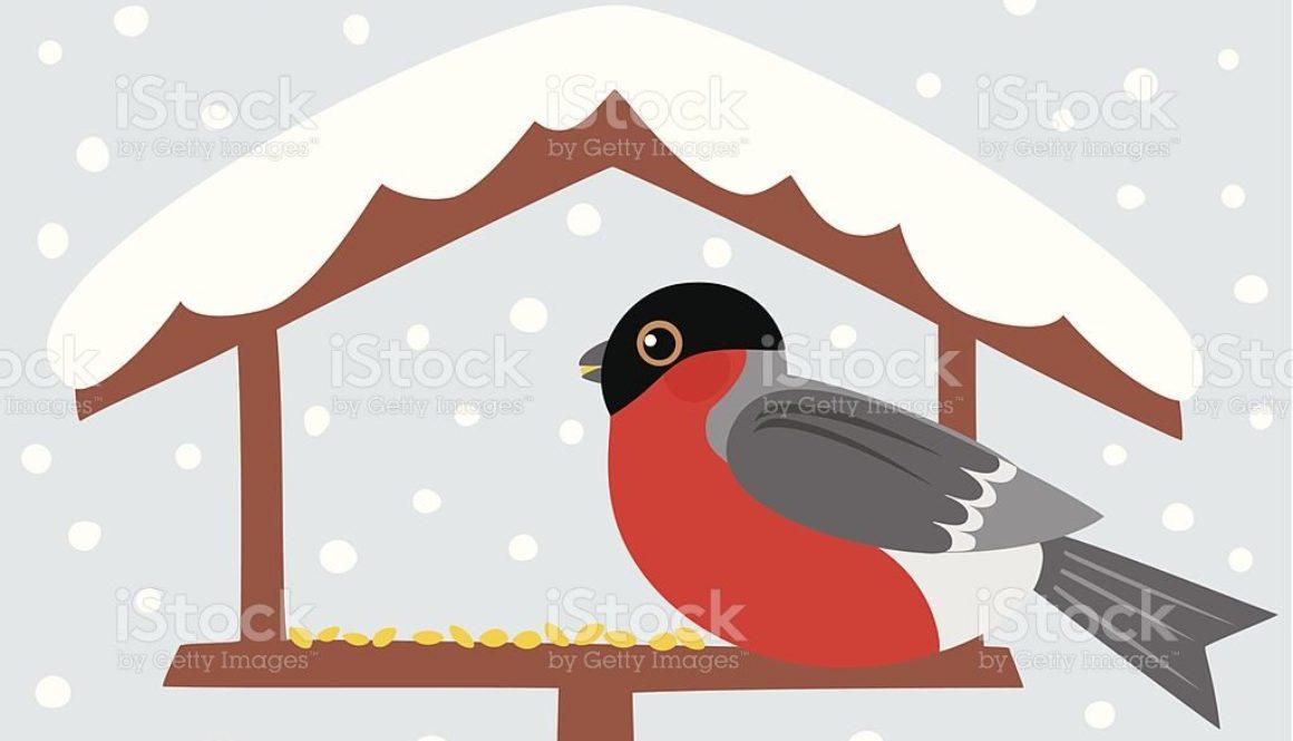 Bullfinch sitting on birdtable in the winter